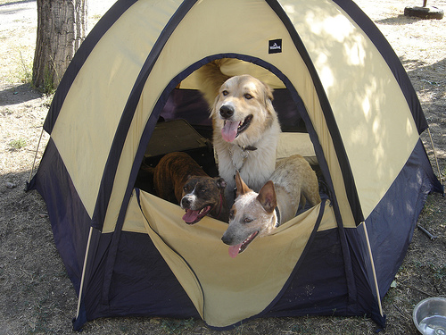 Top Pet Friendly Campsites in Austin